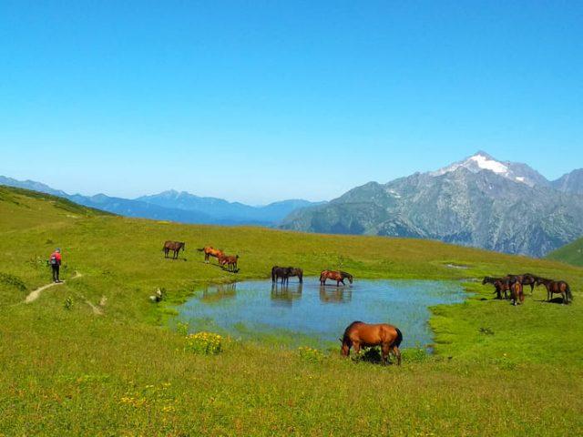 Табун лошадей по тропе на гору Табунная